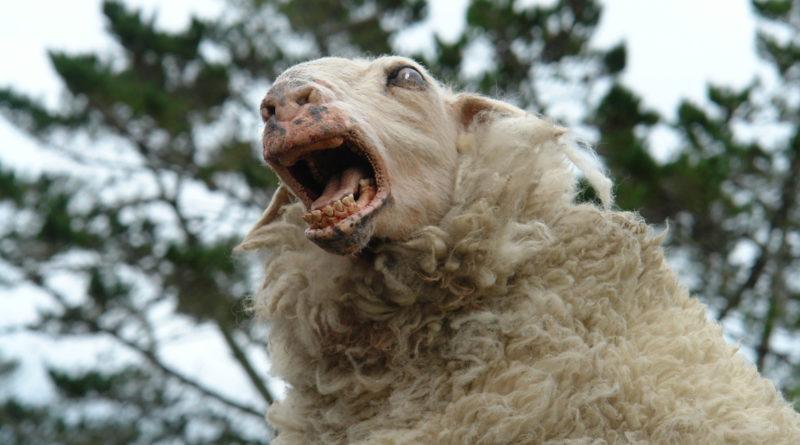 Black Sheep (2006) – Baaah baaah motherfucker